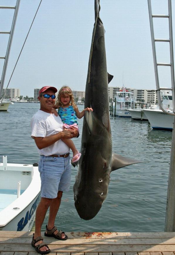 shark caught in Destin