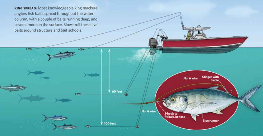How To Catch Saltwater Bait Fish
